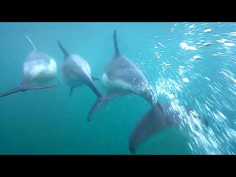 Lyme Bay Dolphins, underwater shoots